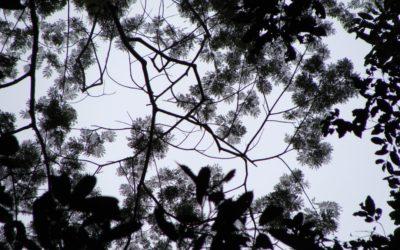 Os mitos da Amazônia