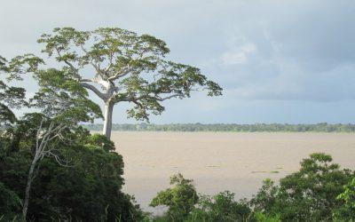 As diferentes florestas amazônicas